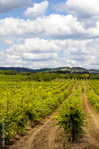 Foto op Canvas Wijngaard Beautiful Vineyard landscape