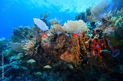 Deurstickers Koraalriffen Colorful tropical coral reef in the caribbean sea