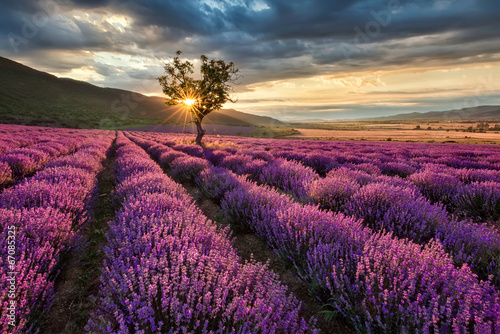 Stunning landscape with lavender field at sunrise Poster