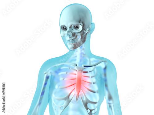 Weibliche Anatomie - Brustschmerzen - Buy this stock illustration ...