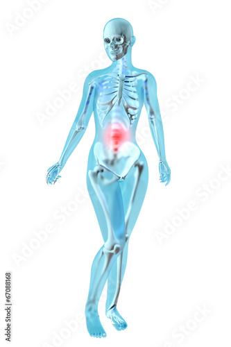Weibliche Anatomie - Bauchschmerzen – kaufen Sie diese Illustration ...