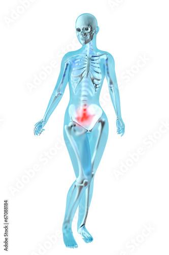 Weibliche Anatomie - Menstruationsschmerzen – kaufen Sie diese ...