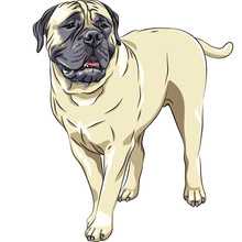 Vector Sketch Portrait Of The Domestic Dog Breed Bullmastiff Sta