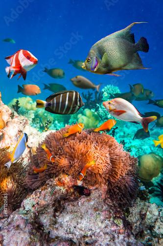 Foto Anemonefish