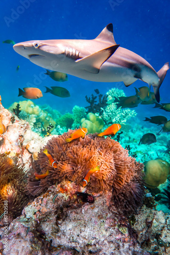 Fotobehang Onder water Tropical Coral Reef.