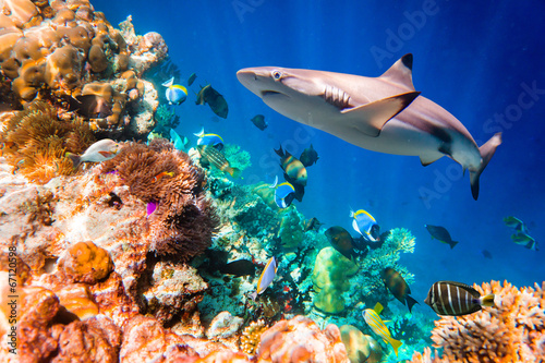 Onder water Tropical Coral Reef.