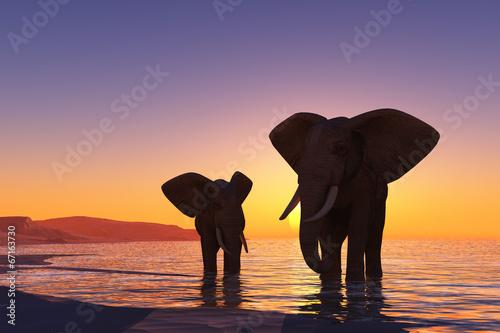 Elephants on the beach.