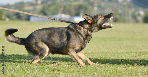 dog training Canvas Print
