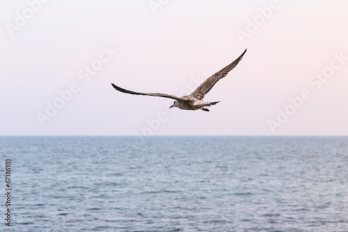 Fotografia, Obraz  sky sea gull