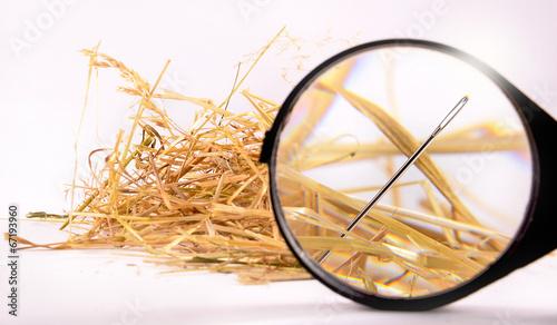 Fotografia Needle in haystack