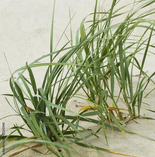 zielona-trawa-na-piasku