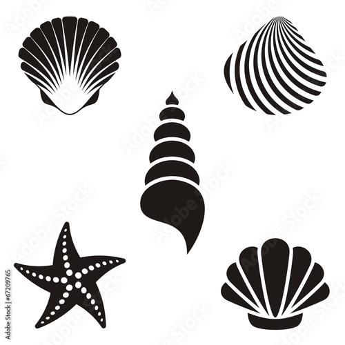 Sea shells #67209765