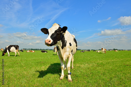 dairy cows on farmland Fotobehang