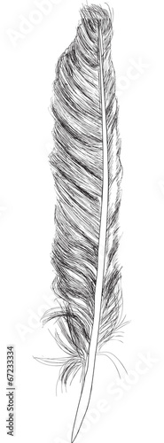 single feather sketch isolated on white