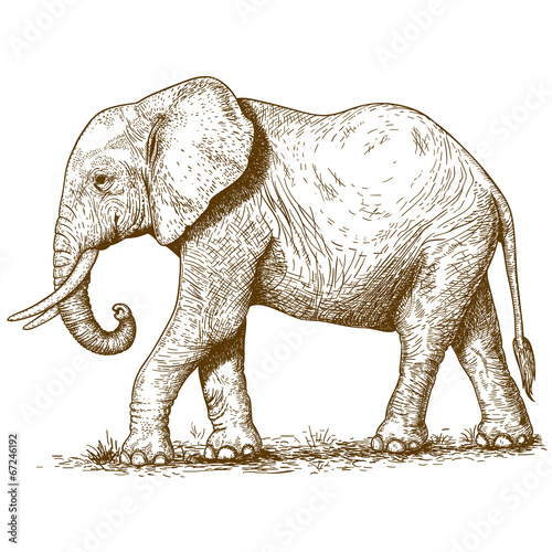 Photo  vector illustration of engraving elephant