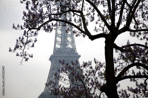Big tree on the Eiffel tower, Paris. France.
