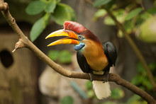 Great Hornbill Stand On The Br...
