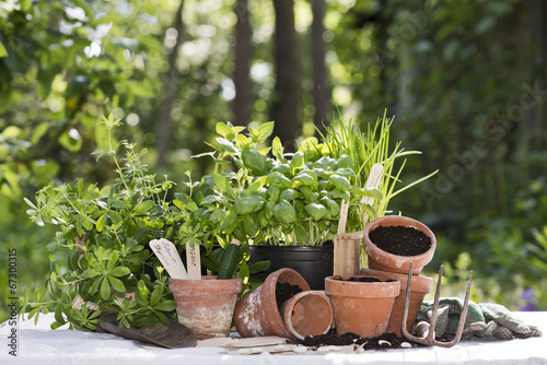 Fototapeta herbs in the garden obraz