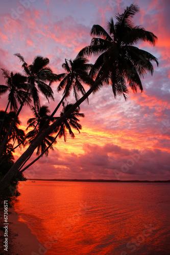 Silhouetted palm trees on a beach at sunset, Ofu island, Tonga