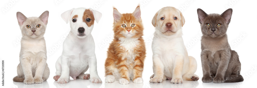 Fototapety, obrazy: Group of small kitten and puppies