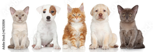 Photo  Group of small kitten and puppies