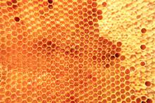 Bee Wax With Fresh Honey