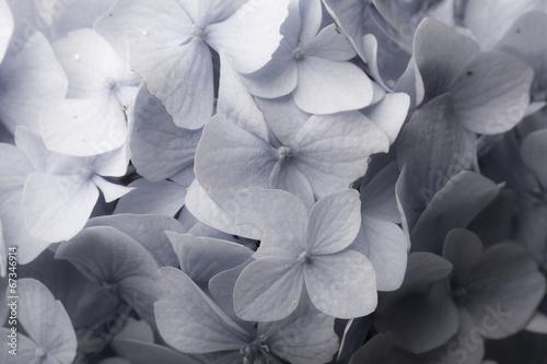 Kwiatowe tło
