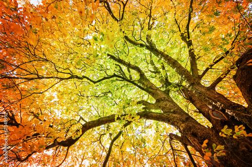 Herbst-Baum Version 2