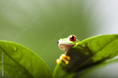 Tuinposter Kikker Frog shadow on the leaf