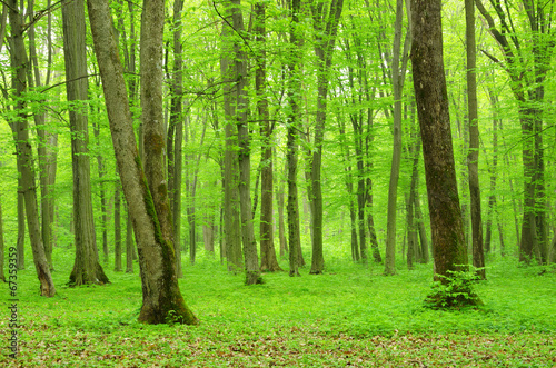 Foto op Plexiglas Groene green forest