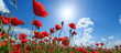 Field of wild red poppies on a sunny summer day