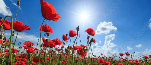 Foto op Canvas Klaprozen Field of wild red poppies on a sunny summer day