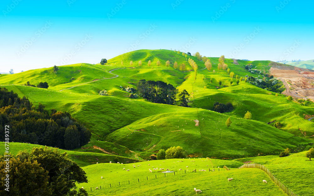Fototapety, obrazy: Hills of the New Zealand