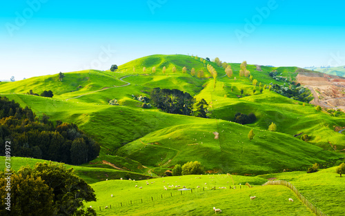 Foto op Canvas Nieuw Zeeland Hills of the New Zealand