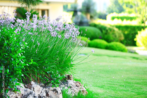 Fototapeta Beautiful landscaping in garden obraz