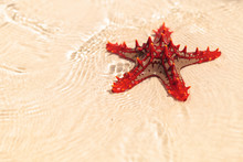 Beautiful Red Starfish In Shal...