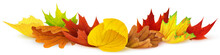 Isolated Leaves. Colorful Autumn Leaves Over White Background, Design Element