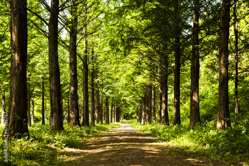obraz lub plakat Szlak oświetlenie Drzewo