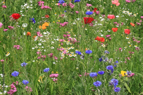 view on flowers on a meadow - 67450746