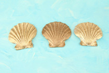 Colorful Seashells On Color Background