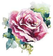 Fototapetawatercolor rose. Flower painting. Vector EPS 10.