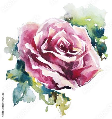roza-akwarela-malowanie-kwiatow-wektor-eps-10