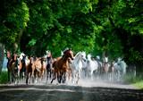 Fototapeta Horses - Runing horses