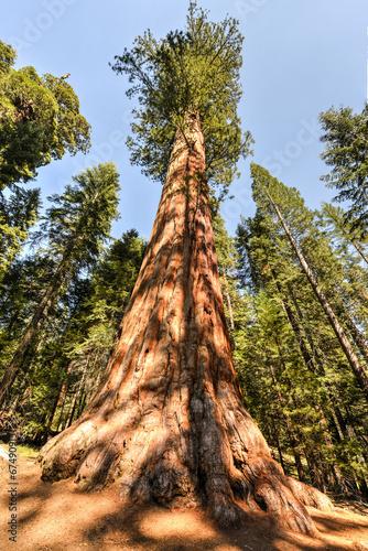 Keuken foto achterwand Verenigde Staten Sequoia National Park