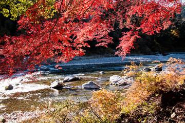 Panel Szklany Rzeki i Jeziora 御岳渓谷の紅葉