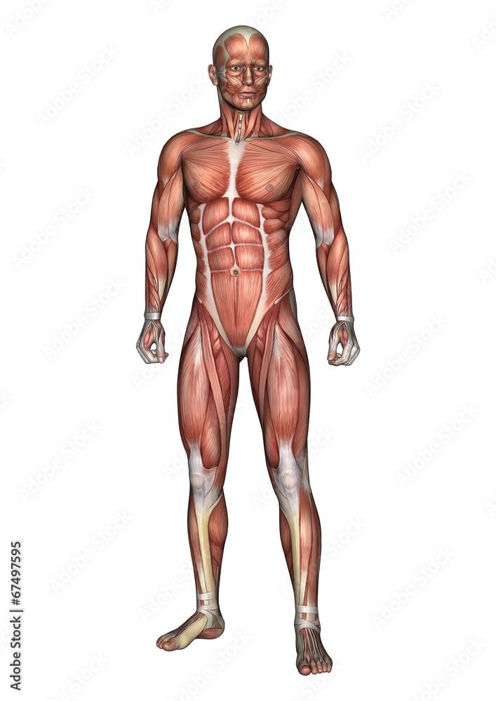 Photo Art Print Male Anatomy Figure Europosters