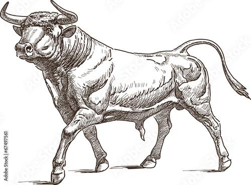 Obraz na plátne bull