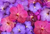 Fototapeta Orchid - beautiful blooming orchid
