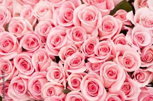 Slika na platnu ピンクのバラ バラ 薔薇 ピンク ピンク色