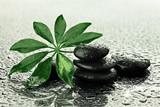 Fototapeta Kamienie - Mokre kamienie bazaltowe z liściem